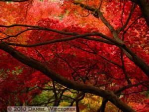 Nov26_049_JindaiBG_FallColorsRC