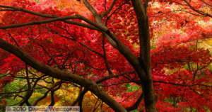 Nov26_050_051_Stitch_JindaiBG_FallColorsRC