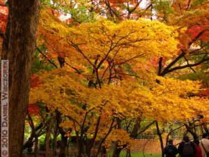 Nov26_069_JindaiBG_FallColorsRC