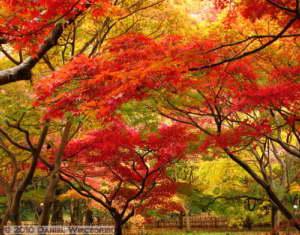 Nov26_092_093_094_Stitch_JindaiBG_FallColorsRC