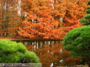 Nov26_119_JindaiBG_FallColorsRC