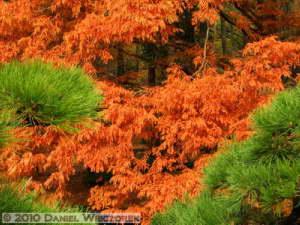 Nov26_121_JindaiBG_FallColorsRC