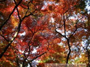 Nov27_062_Tonogayato_FallColorsRC