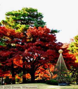 Nov27_078_079_SH_V_Stitch_Tonogayato_FallColorsRC.jpg