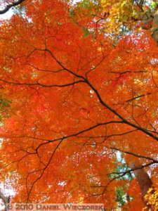 Nov27_086_Tonogayato_FallColorsRC