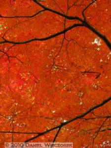 Nov27_090_Tonogayato_FallColorsRC