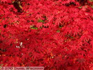 Nov27_132_MusashinoPk_FallColorsRC