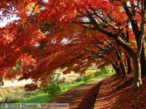 Nov27_136_MusashinoPk_FallColorsRC