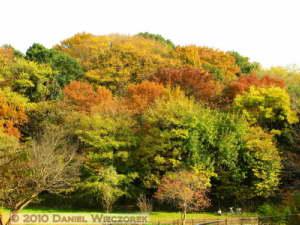 Nov27_168_Musashino_NogawaPk_FallColorsRC
