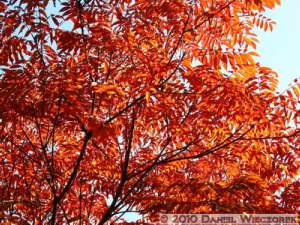 Nov5_005_MtMitake_FallColorRC