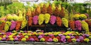 Nov6_012CTMSIP_JindaiBG_ChrysanthemumWaterfallRC
