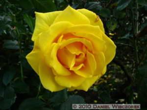 Nov6_062_JindaiBG_RoseGardenRC
