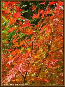 Nov12_044_OkutamaMukashiMichiHikeRC