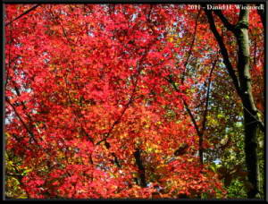 Nov12_045_OkutamaMukashiMichiHikeRC