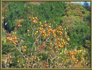 Nov12_060_OkutamaMukashiMichiHikeRC