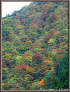 Nov12_098_099_100_Fused_OkutamaMukashiMichiHikeRC