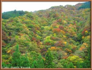 Nov12_101_102_103_Fused_OkutamaMukashiMichiHikeRC