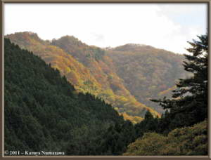 Nov12th_Okutama053_FallColorsRC
