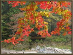 Nov18_157_TamaRiver_Mitake_Sawai_FallColor_RC