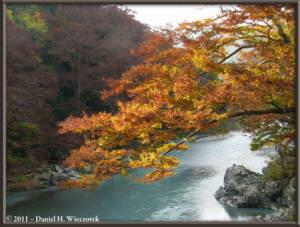 Nov18_178_TamaRiver_Mitake_Sawai_FallColor_RC