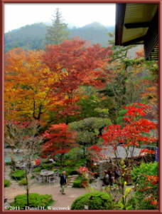 Nov18_191_192_193_TMTC_TamaRiver_Mitake_Sawai_FallColor_RC