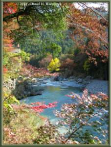 Nov18_27_TamaRiver_Mitake_FallColor_GinkgoRC