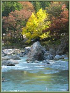 Nov18_30_TamaRiver_Mitake_FallColor_GinkgoRC