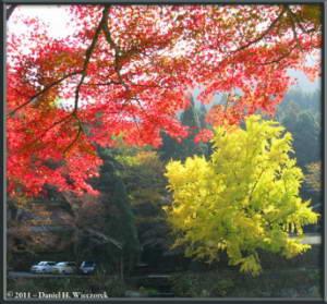 Nov18_86_87_Stitch_TamaRiver_Mitake_FallColor_GinkgoRC