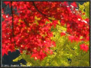 Nov18_94_TamaRiver_Mitake_FallColor_GinkgoRC