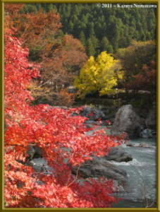 Nov18th_Mitake038_GinkgoRC