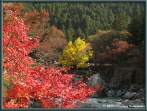 Nov18th_Mitake039_GinkgoRC