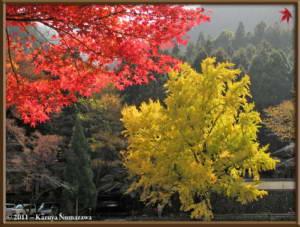 Nov18th_Mitake050_GinkgoRC