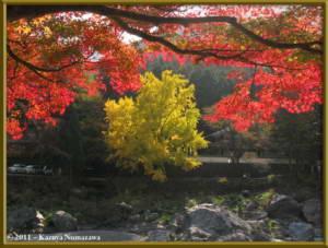 Nov18th_Mitake059_GinkgoRC
