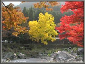 Nov18th_Mitake087_GinkgoRC
