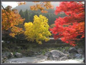 Nov18th_Mitake092_GinkgoRC