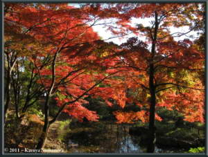 Nov25th_FuchuuNoMoriPark049_FallColorsRC