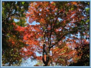 Nov25th_Tonogayato015_FallColorsRC