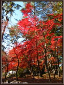 Nov26_091_Nagatoro_Iwadatami_Area_MapleParkRC