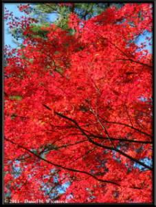 Nov26_092_Nagatoro_Iwadatami_Area_MapleParkRC