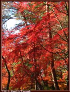 Nov26_093_Nagatoro_Iwadatami_Area_MapleParkRC
