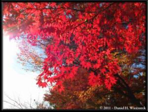 Nov26_105_Nagatoro_Iwadatami_Area_MapleParkRC