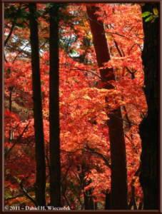 Nov26_114_Nagatoro_Iwadatami_Area_MapleParkRC