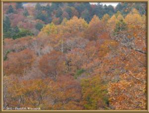 Nov03_02_Daibosatsurei_FallColorsRC
