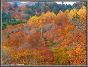 Nov03_03_Daibosatsurei_FallColorsRC