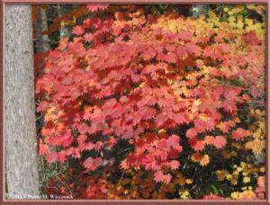 Nov03_112_Daibosatsurei_FallColorsRC