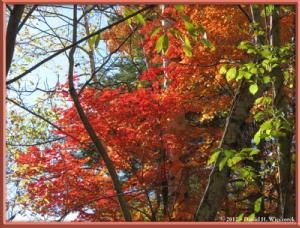 Nov03_189_Daibosatsurei_FallColorsRC
