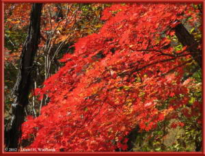 Nov03_195_Daibosatsurei_FallColorsRC