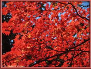 Nov03_197_Daibosatsurei_FallColorsRC