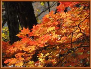Nov03_198_Daibosatsurei_FallColorsRC
