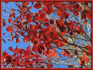 Nov03_220_Daibosatsurei_FallColorsRC